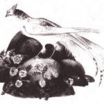 Синяя птица (даргинская) - Сказка народов России
