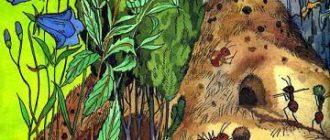 Сказка про лекарственные растения - П.А.Синявский - Отечественные авторы