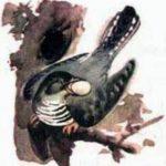 Сказки-несказки: Кукушонок - Виталий Бианки