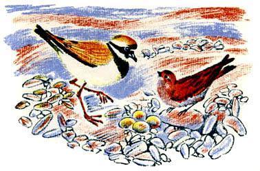 птицы у гнезда с яйцами