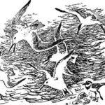 Сказки-несказки: Почему чайки белые - Виталий Бианки