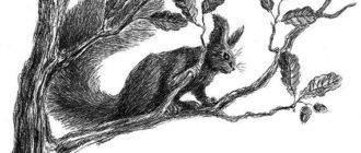Сказки-несказки: Теремок - Виталий Бианки