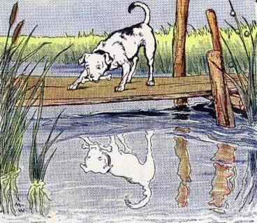 Собака и её отражение
