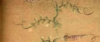 Старушка на бобе - Португальская сказка