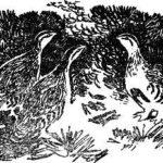 Тайна ночного леса - Виталий Бианки
