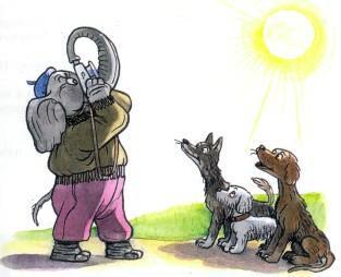 слон фотограф фотографирует солнце собаки рядом