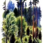 В лесу летом - Константин Ушинский