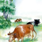 Важные коровы - Валентина Осеева
