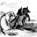 Волк и лиса - Жан де Лафонтен