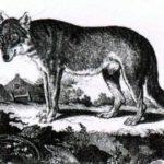 Волк и пастухи - Жан де Лафонтен