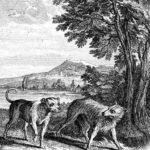 Воля и неволя - Жан де Лафонтен