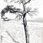 Ворон и лисица - Эзоп