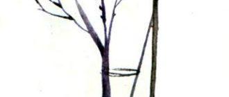 Я на уроке первый раз: Урок в саду - Агния Барто