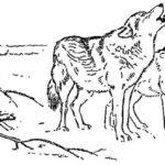 За волками - Георгий Скребицкий
