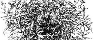 Заботливый цветок - Константин Паустовский