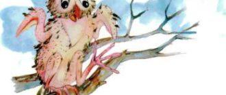 Завистливая сова - Индийская сказка