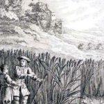Жаворонок с птенцами и землевладелец - Жан де Лафонтен