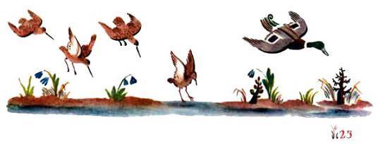 утки и зяблики