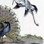 Журавль и павлин - Эзоп