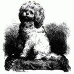Знаменитые собаки - Узнай-ка!