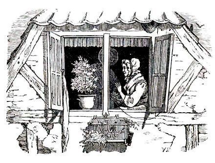 цветок на окне и старушка