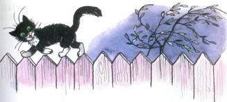 черный кот ходит по забору