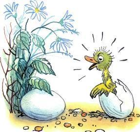 утенок вылупился из яйца