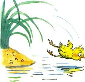 цыпленок прыгает в воду озеро реку