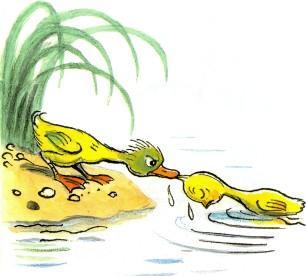 утенок спасает цыпленка вытаскивает из воды