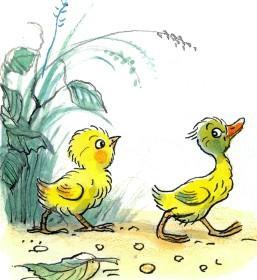цыпленок и утенок пошли гулять