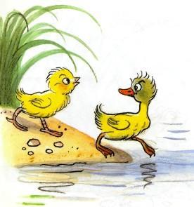 цыпленок и утенок пошли купаться на озеро