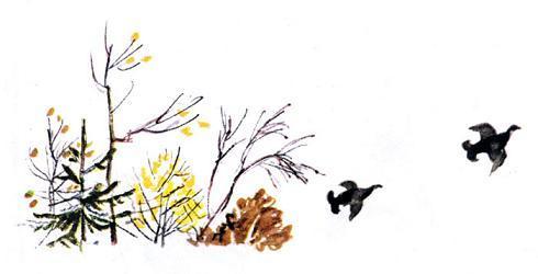 куропатки