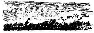 Хомса идет в траве