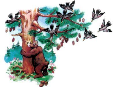 медведь трясет кедр шишки падают