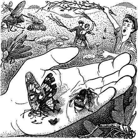 Друзья-насекомые