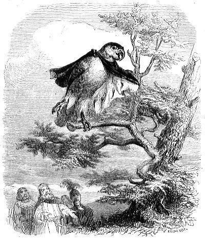 Два попугая и король с сыном