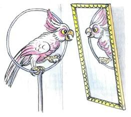попугай в круге передзеркалом отражение