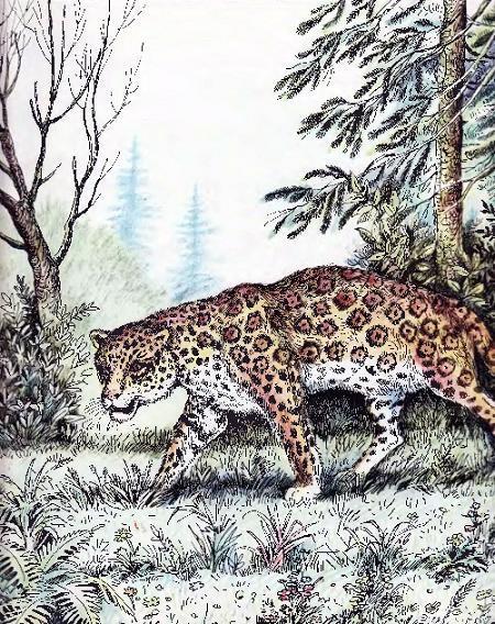 ягуар в лесу