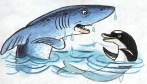 акула и дельфин