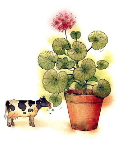 Книжная коровка кушает цветок
