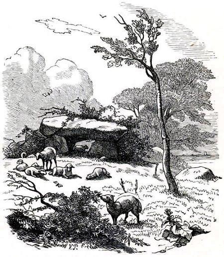 животные на пастбище