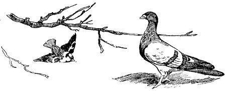 Как голубь казака спас