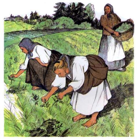 женщины собирают на поле