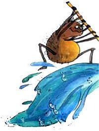 смелый паук отворил воду