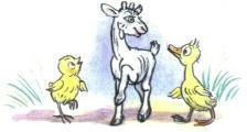 утенок цыпленок козленок