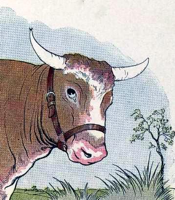Комар и бык