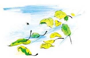 листья опадают