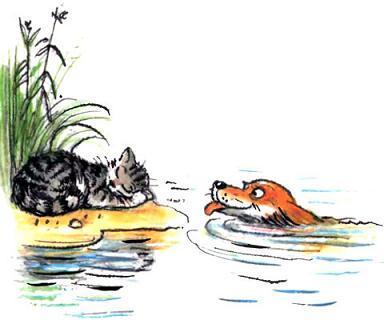 кошка спит на песке а пес плавает в воде