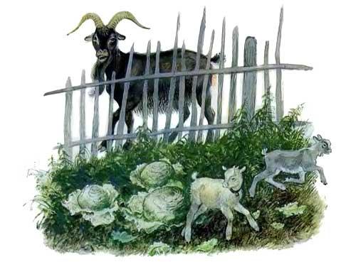Козел в огороде капуста пусти козла в огород