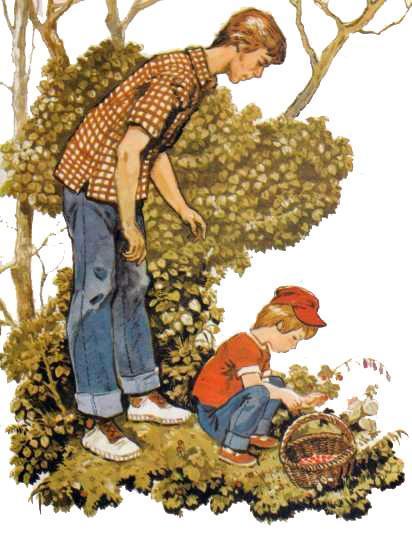 Андрюша с папой собирают грибы в лесу